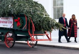 A 'Cinderella story': How this year's White House Christmas tree came to Washington